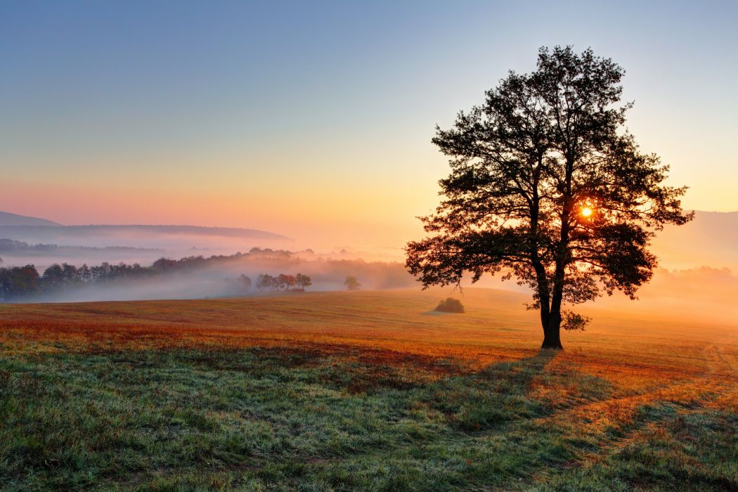 Scenery Fields Sunrises and sunsets Trees Nature wallpaper