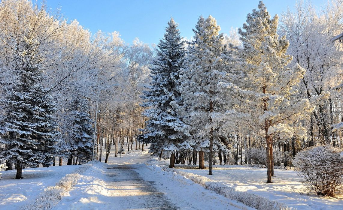 Seasons Winter Forests Snow Trees Nature wallpaper