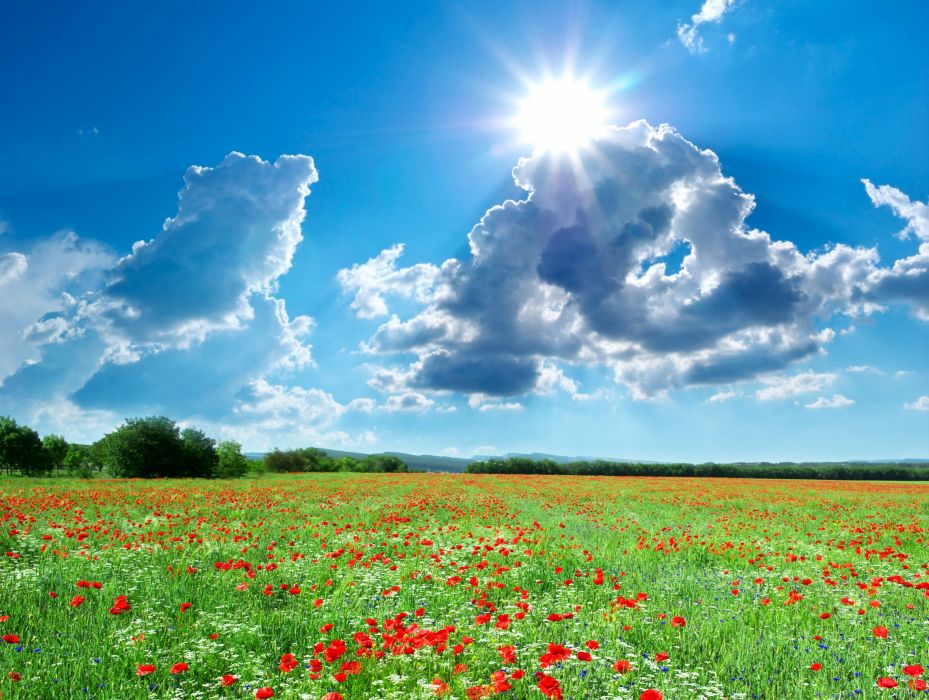 Seasons Summer Fields Scenery Poppies Sky Clouds Sun Nature wallpaper