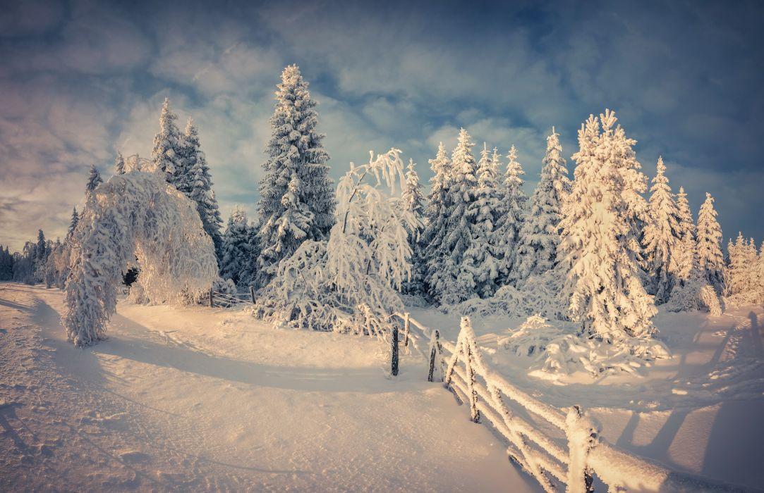 Seasons Winter Snow Fir Nature fence wallpaper