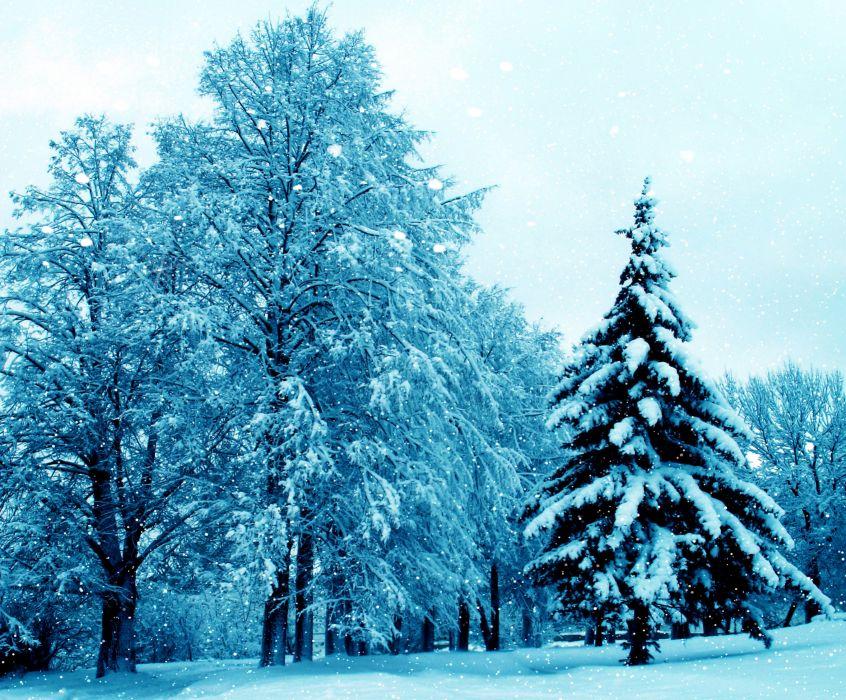 Seasons Winter Trees Fir Snow Nature wallpaper