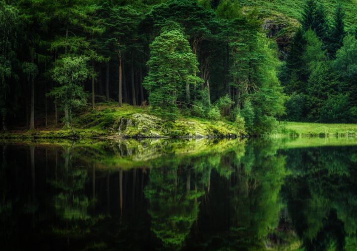 Rivers Forests Trees HDR Nature wallpaper