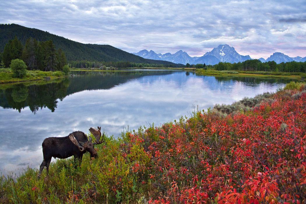 sky mountains lake flowers elk moose deer wallpaper