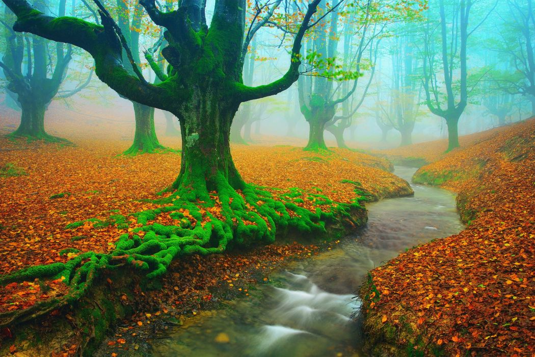 Spain Basque country Vizcaya Alava autumn November trees Beech leaves moss river stream wallpaper