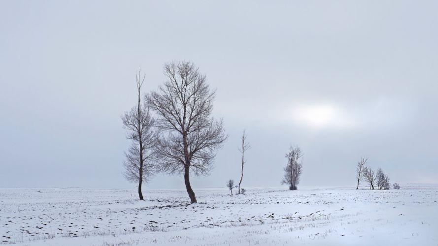 winter field trees landscape wallpaper