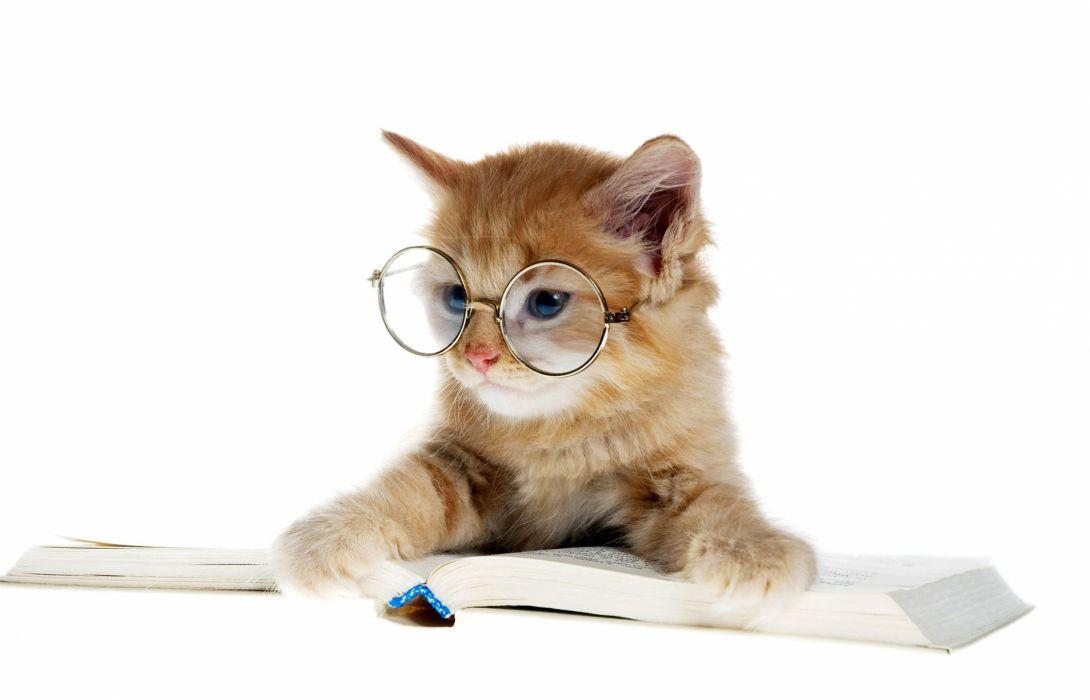 Cats Kitten Glasses Book Animals baby wallpaper