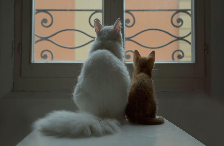 couple cat white kitten red window baby mother wallpaper