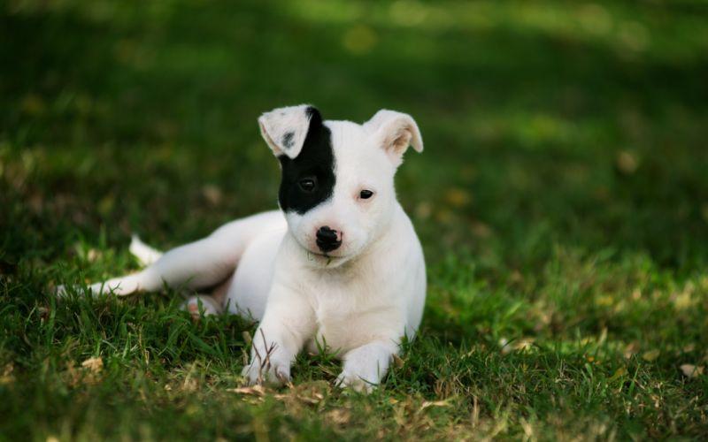 dog puppy grass baby wallpaper