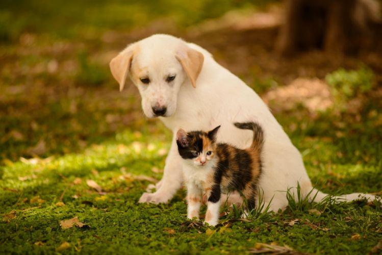 dog puppy kitten friends baby wallpaper