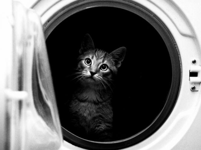cat animals washing machine situation funny black and white photo wallpaper