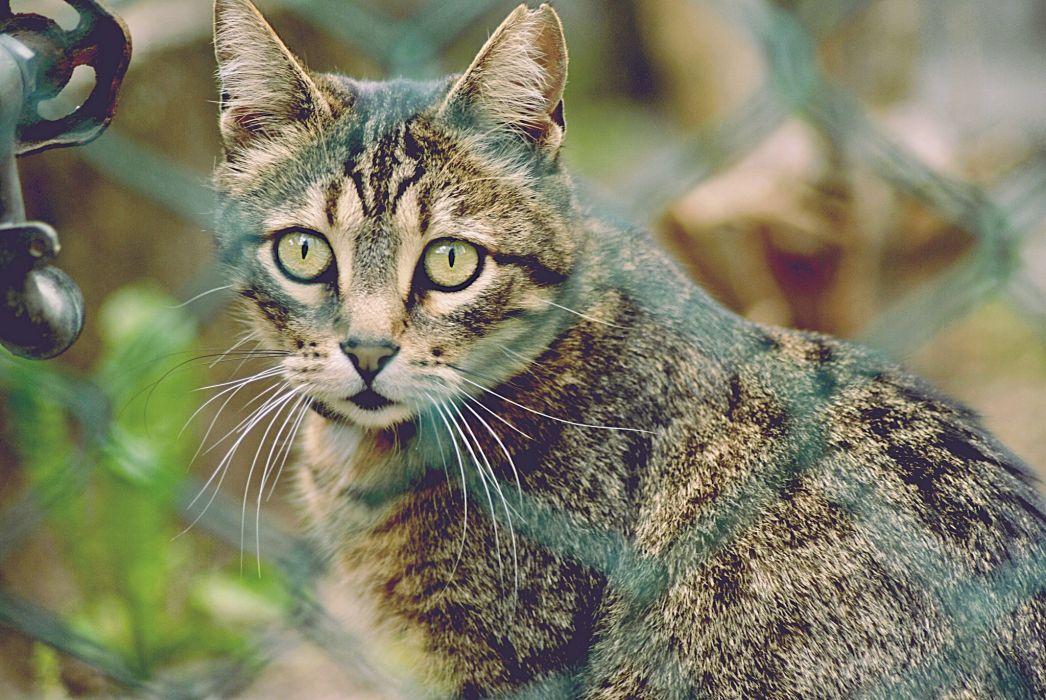 cats eyes cat wallpaper