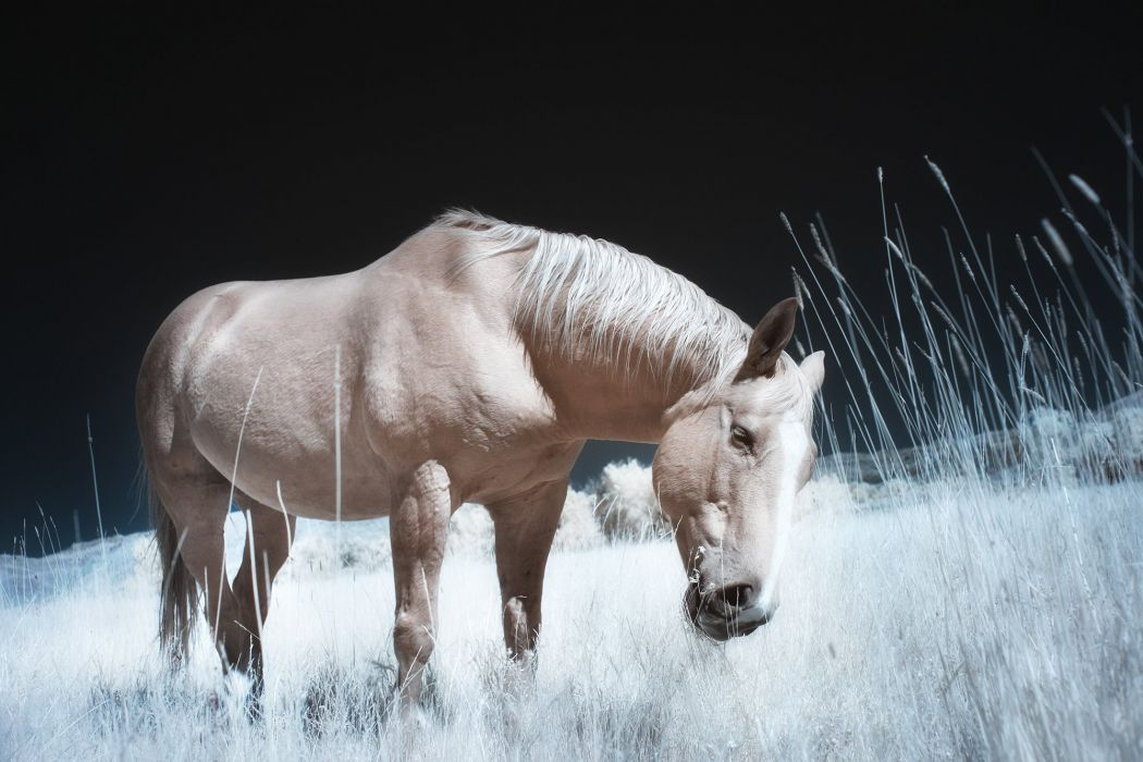 Horses Animals Girls horse wallpaper
