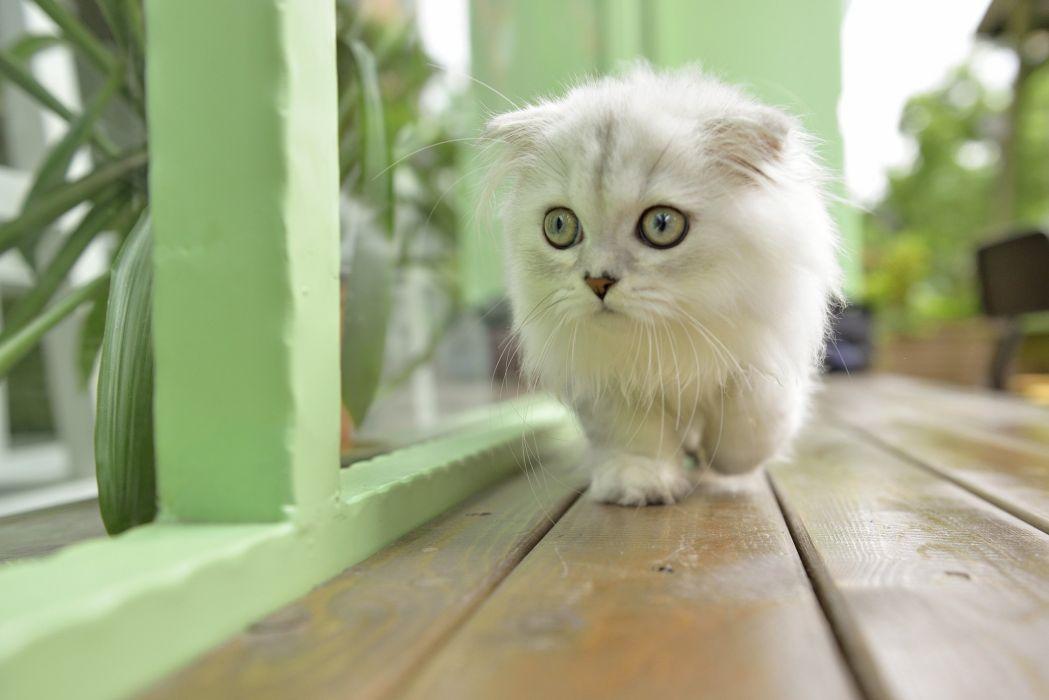 kitten cat baby s wallpaper