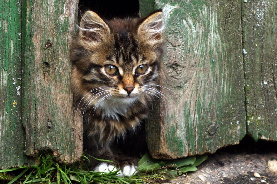 kitten cat baby a wallpaper