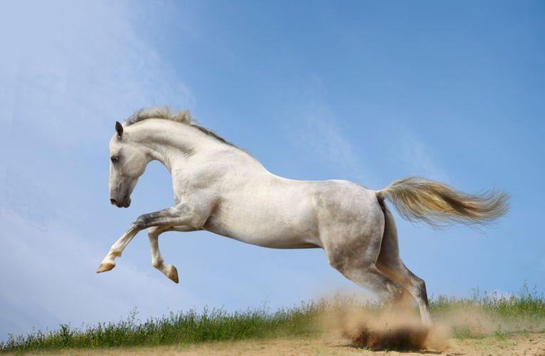Horses Run Animals horse wallpaper