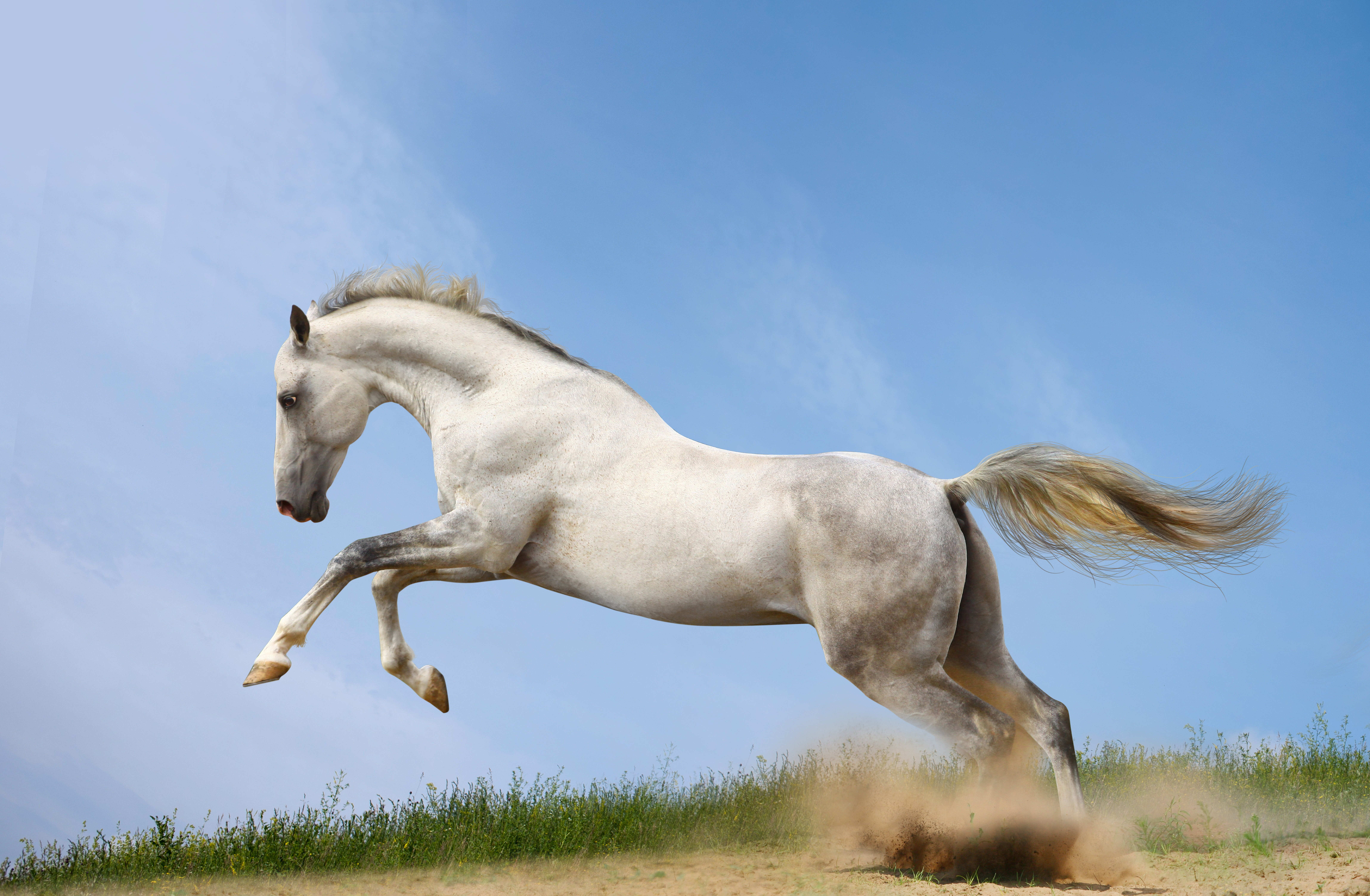 Horses Run Animals horse wallpaper | 9192x6012 | 620722 ...