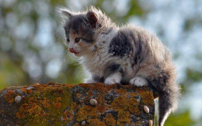 kitten cat baby f wallpaper