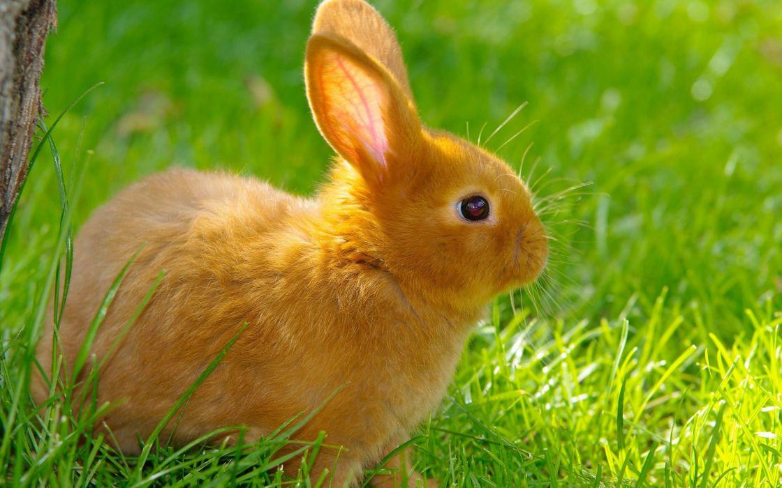 rabbit grass summer nature baby wallpaper