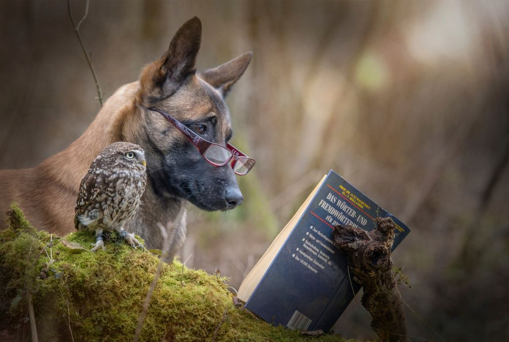 Situation funny dog owl animals book reading friends glasses wallpaper