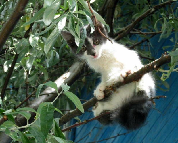 kitten tree baby wallpaper