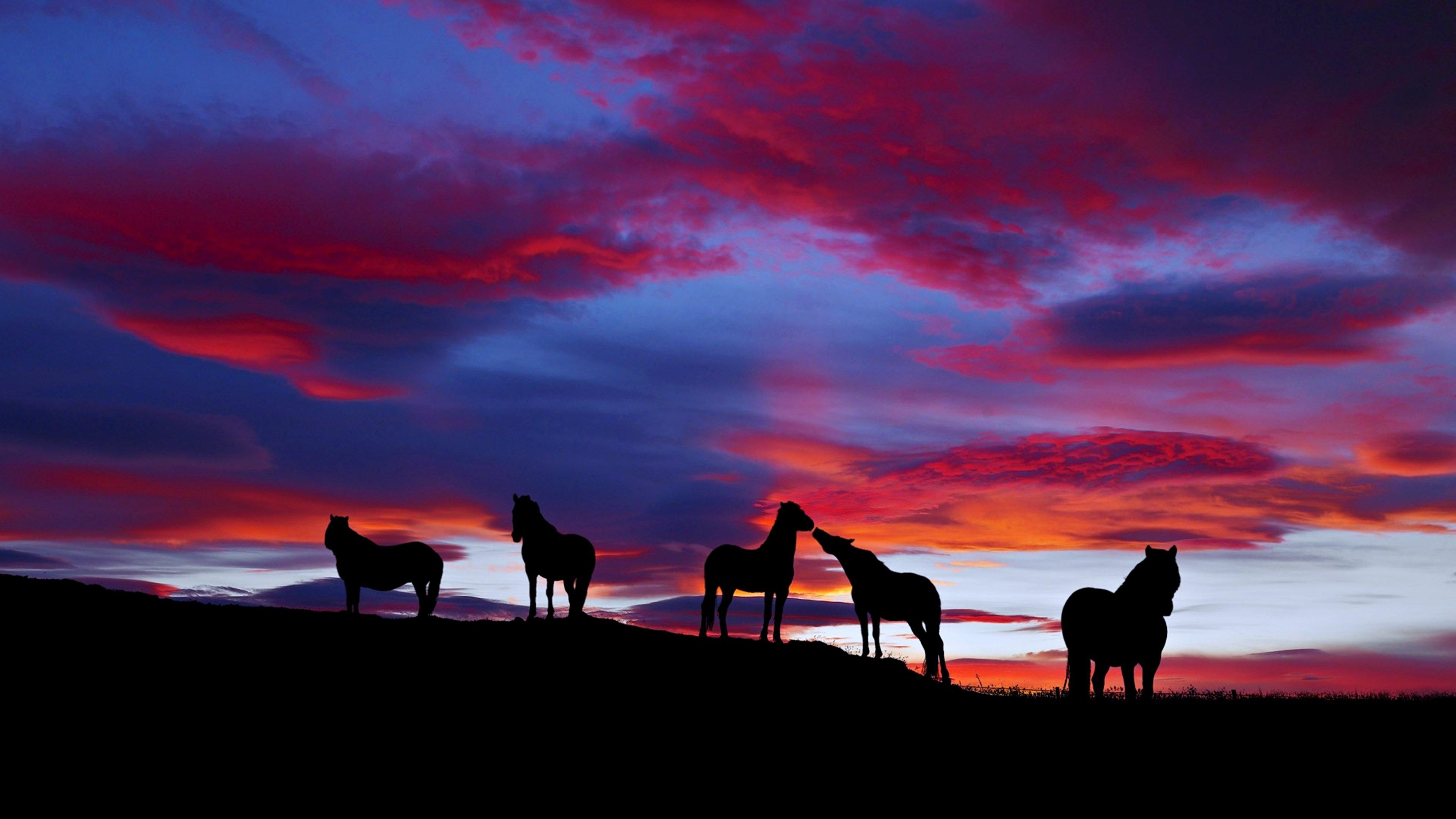 sunset horses cloud landscape nature wild wallpaper