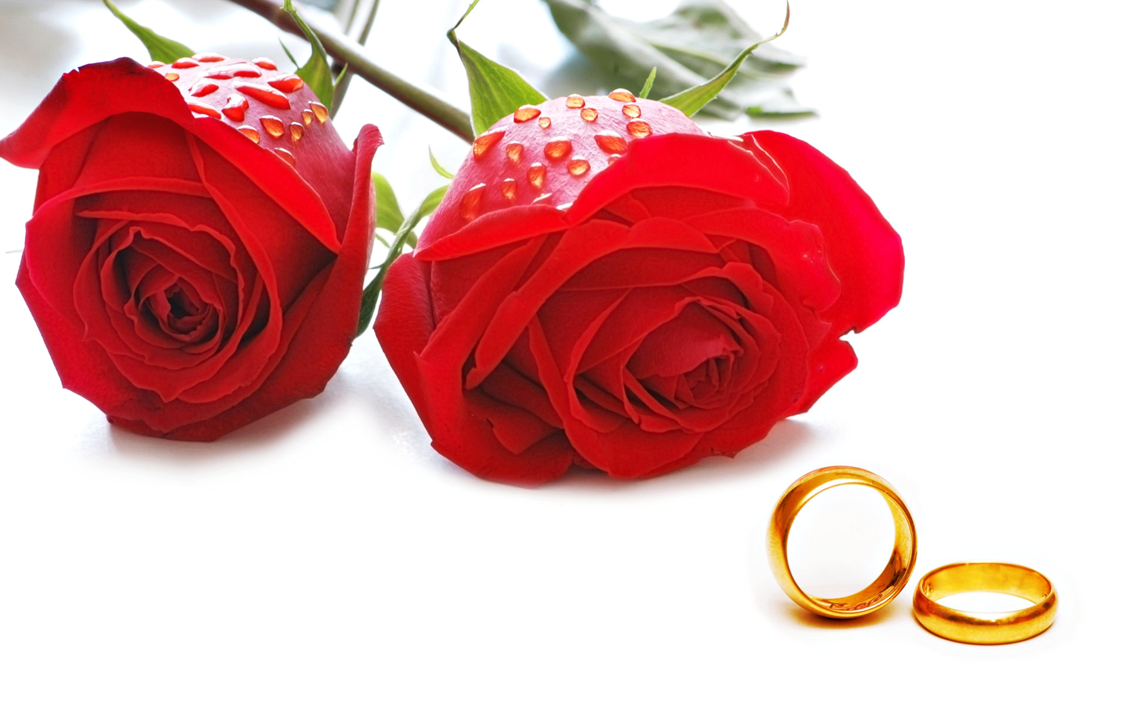 Flowers Roses Red Love Marriage Rings Engagement Golden E Wallpaper 3840x2400 621409 Wallpaperup