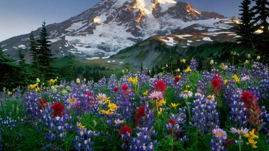 naturaleza-flores-campo-montaA wallpaper