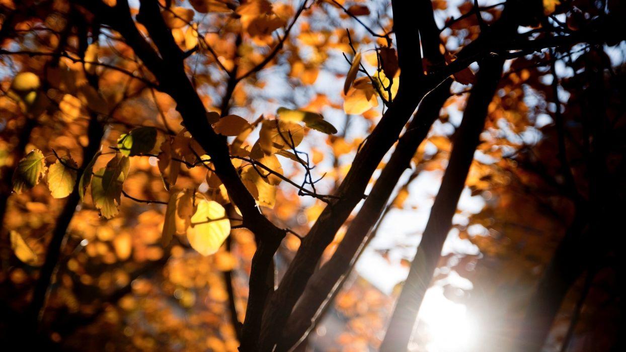 tree autumn landscape sunlight forest wallpaper