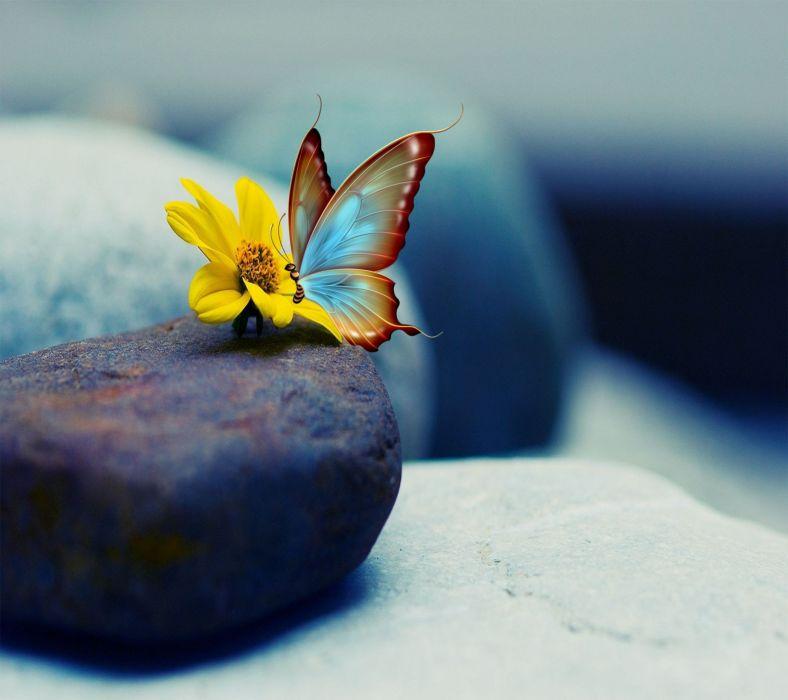 Butterfly-wallpaper-10501443 wallpaper