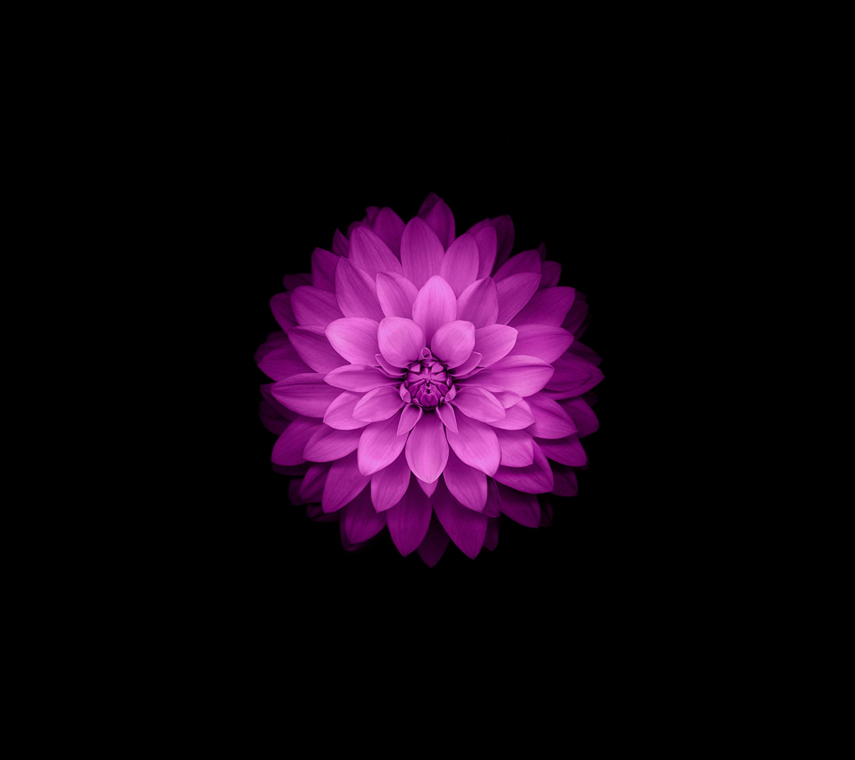 IOS 8 Flower-wallpaper-10400692 Wallpaper