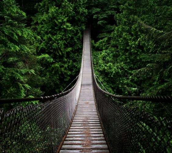 Jungle Bridge-wallpaper-10468245 wallpaper