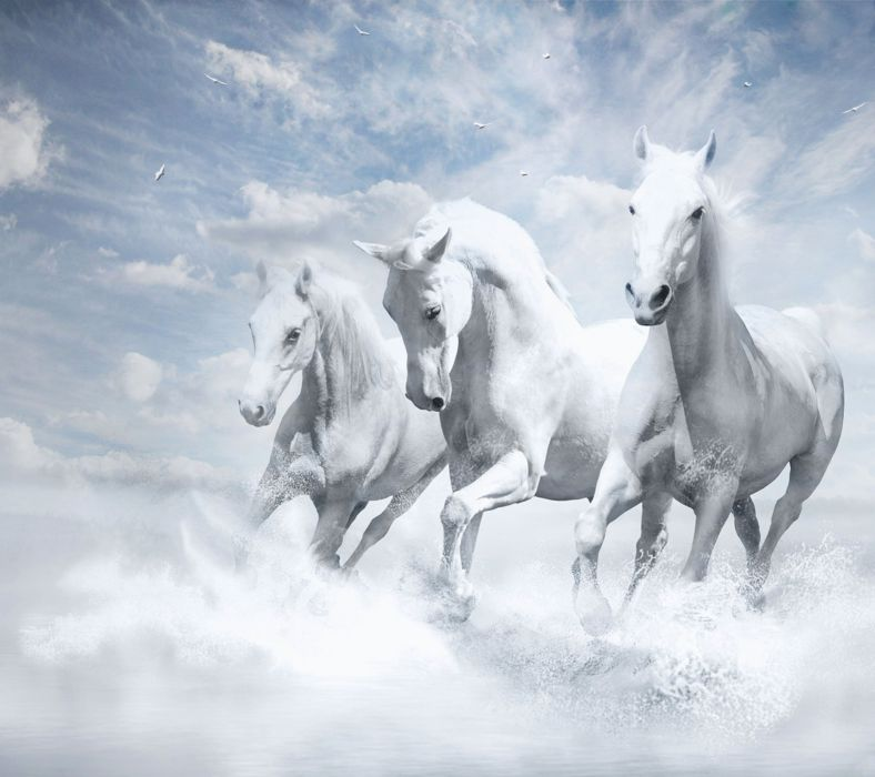 White Horse-wallpaper-10371683 wallpaper