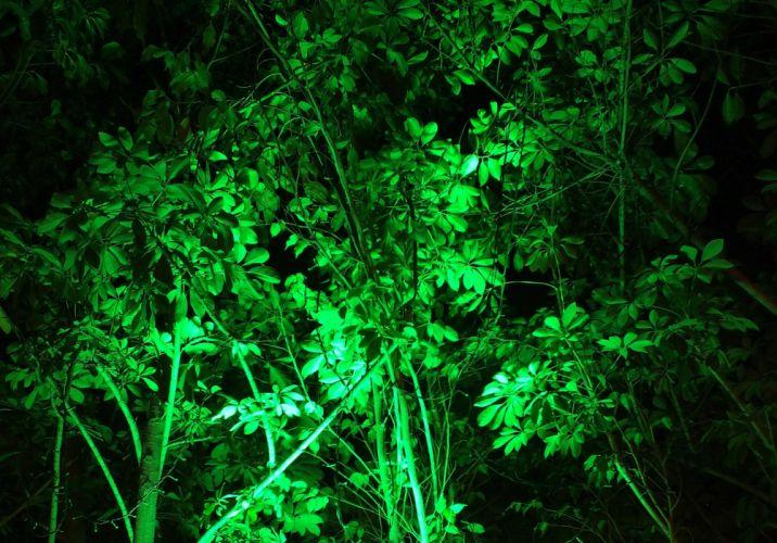 green leaves nature wallpaper