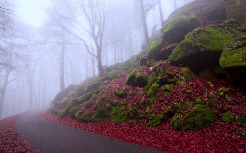 autumn nature landscape fog forest trees rocks beauty road leaves wallpaper