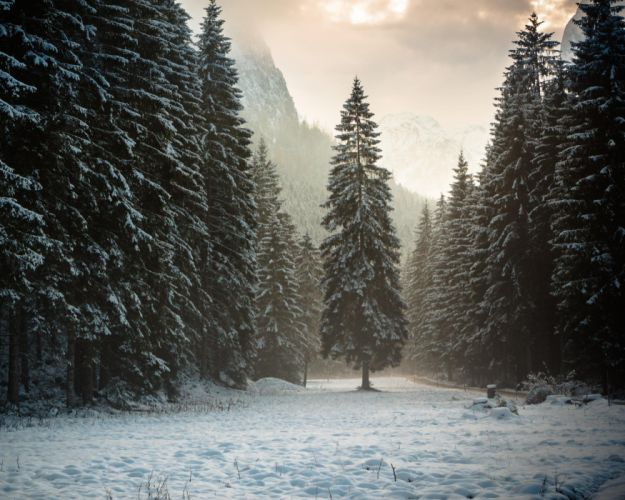 Forest trees mountains snow winter nature landscape wallpaper