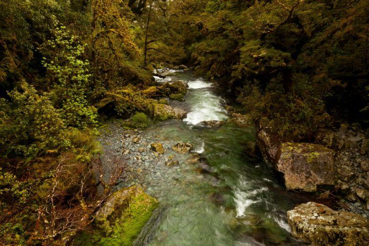 New Zealand Parks Rivers Fiordland Nature wallpaper