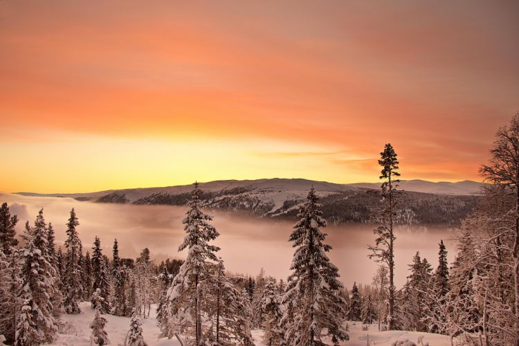 Scenery Seasons Winter Rivers Sunrises and sunsets Fir Nature wallpaper