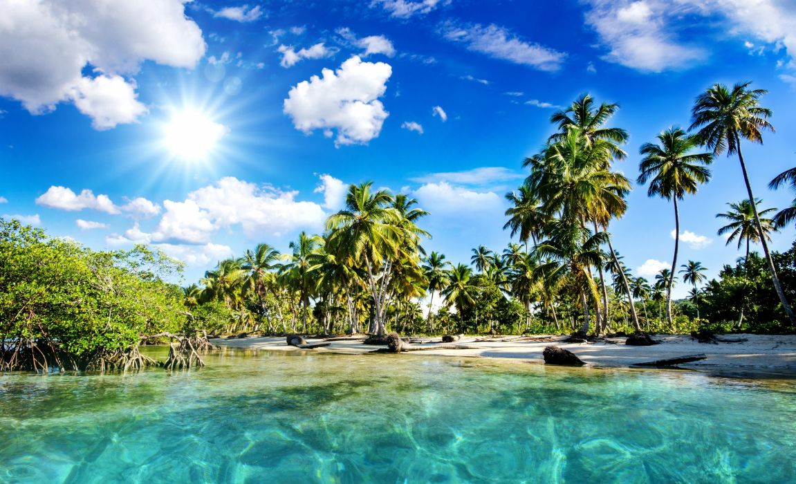sea tropical palm trees beach nature wallpaper