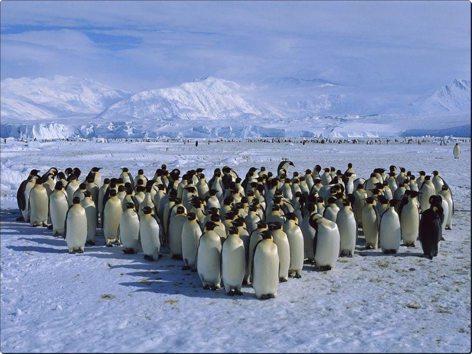 Emperor Penguin Colony Cape Roget Ross Sea Antarctica wallpaper