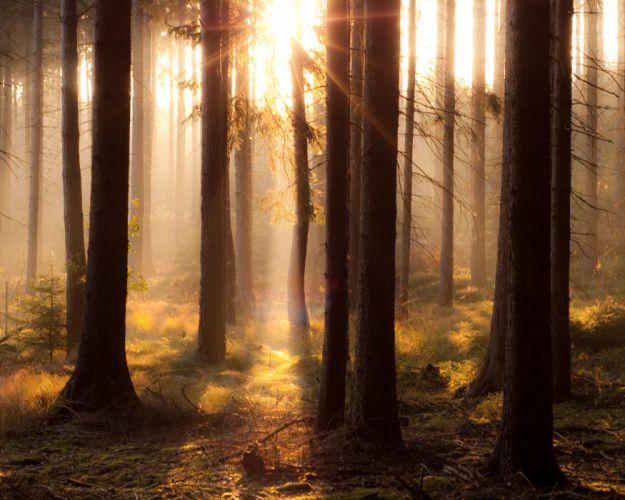 forest sunshine sunlight landscape magic wallpaper