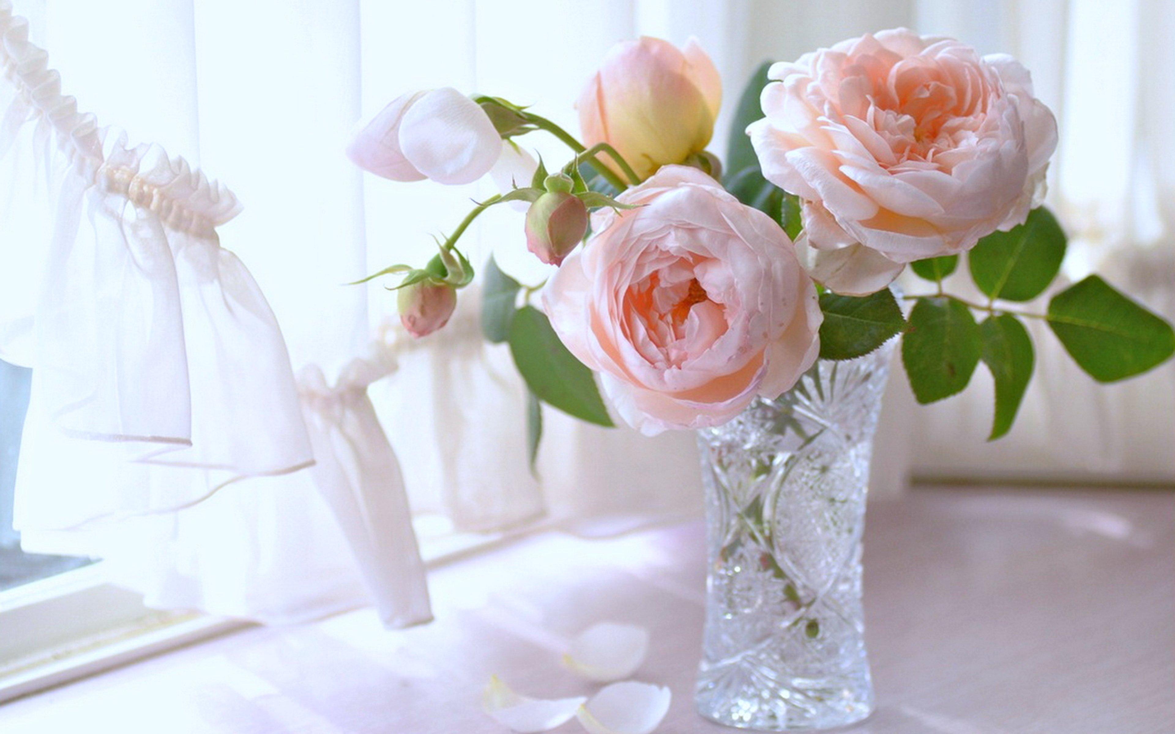 розы в окне фото