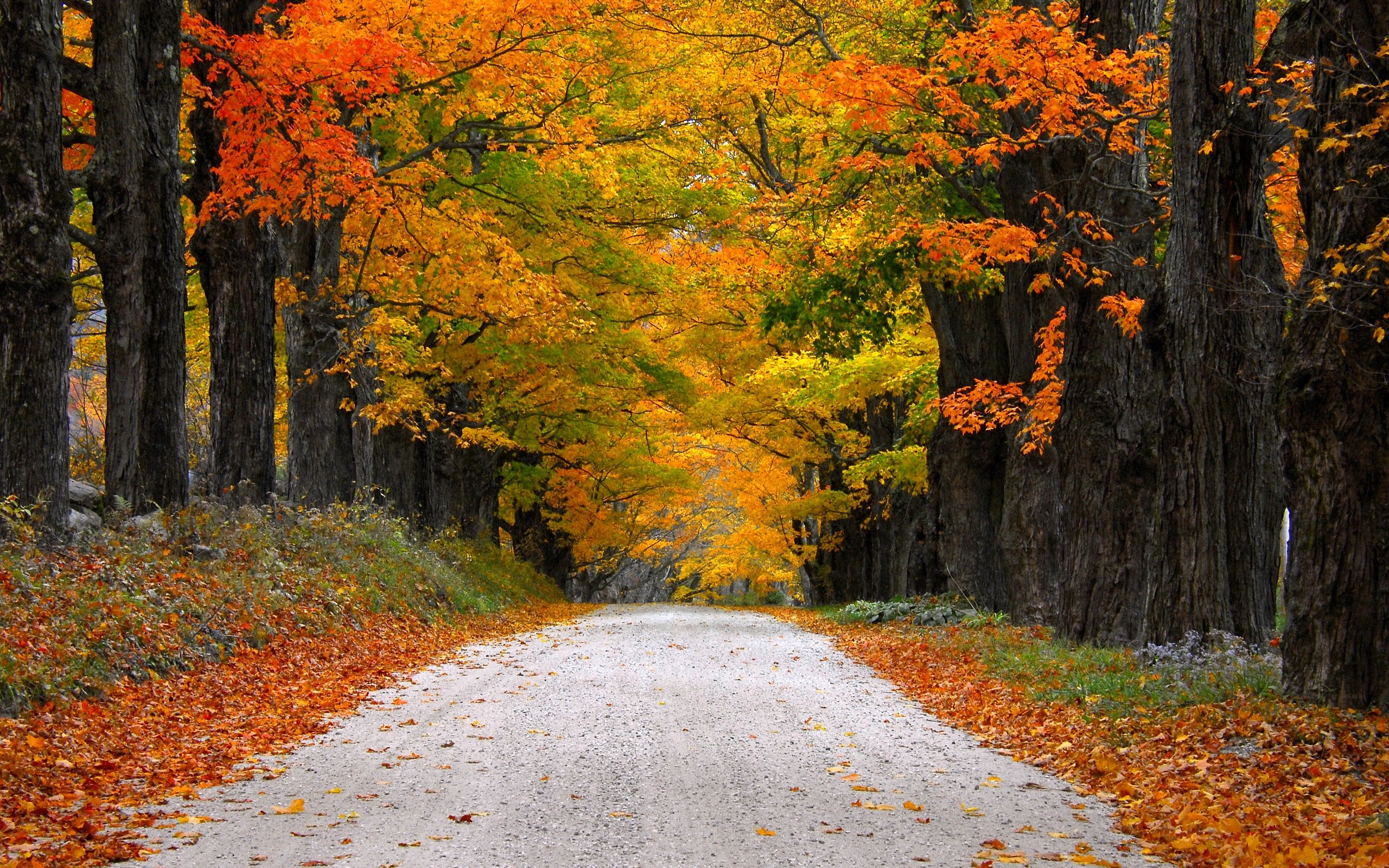 Autumn Nature Path Leaves Mountain Fall Colorful Trees Road Wallpaper