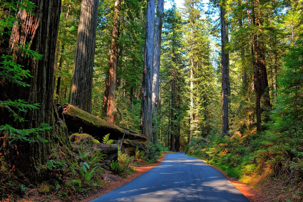 Forest Road Trees Nature wallpaper