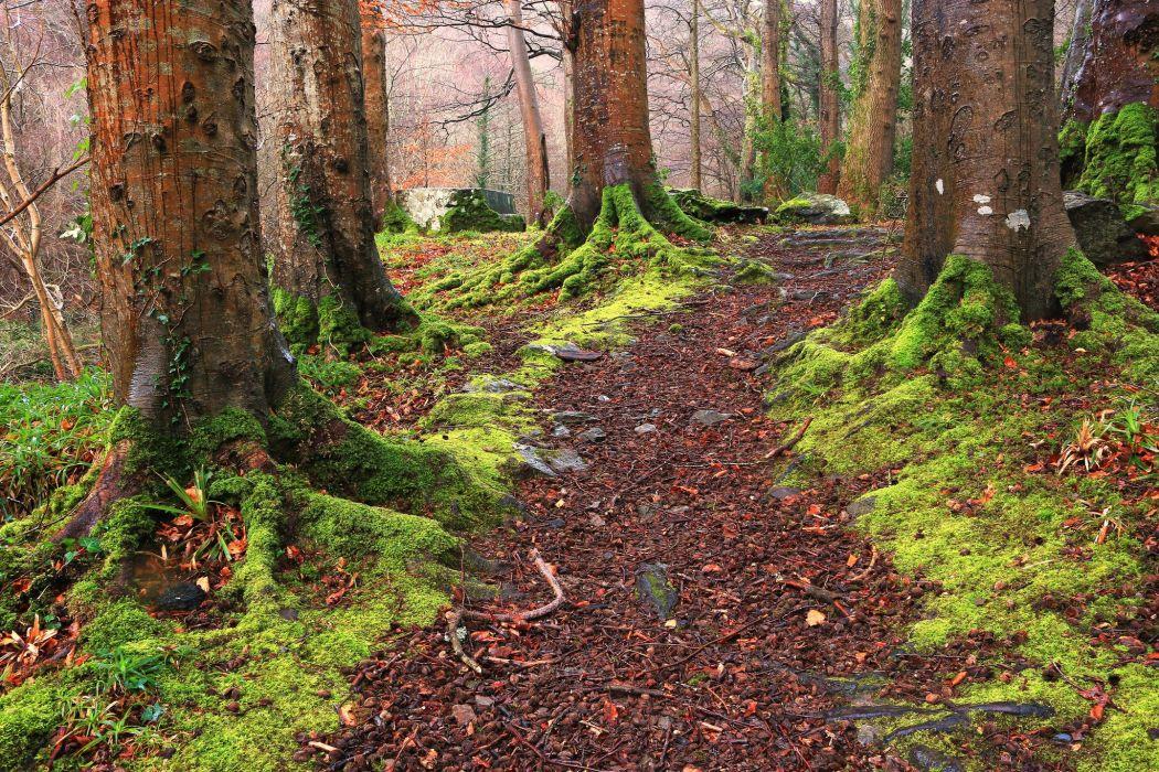 forest trees moss twigs England United Kingdom North Devon Exmoor National Park Near Lynton Exmoor National Park North Devon wallpaper