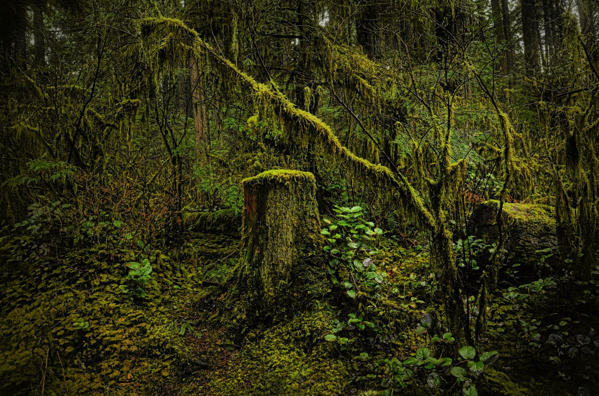 Nature trees wood moss north vancouver british columbia for Columbia woods