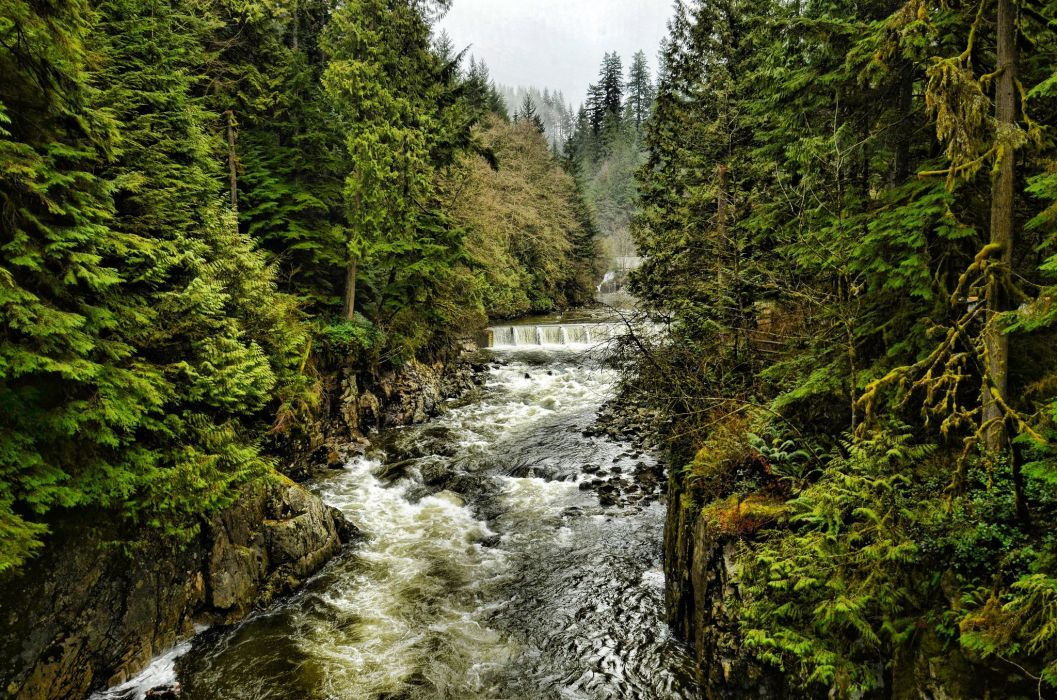 river trees forest North Vancouver British Columbia Canada north vancouver nature canada british columbia forest trees cleveland dam wallpaper