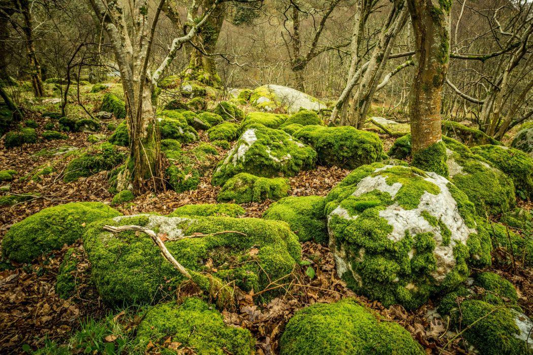 stones moss leaves trees Glendalough Ireland Upper Lake Glendalough forest wallpaper