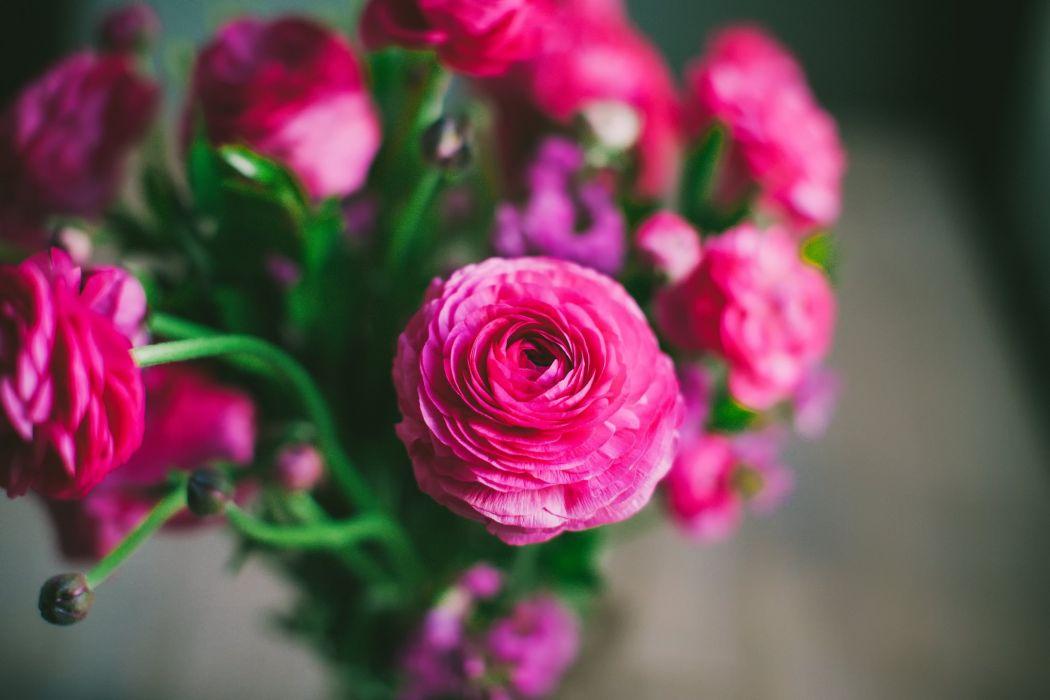 flowers petals buttercups pink wallpaper