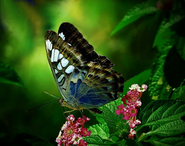 Butterfly wings leaves flowers animals close-up wallpaper