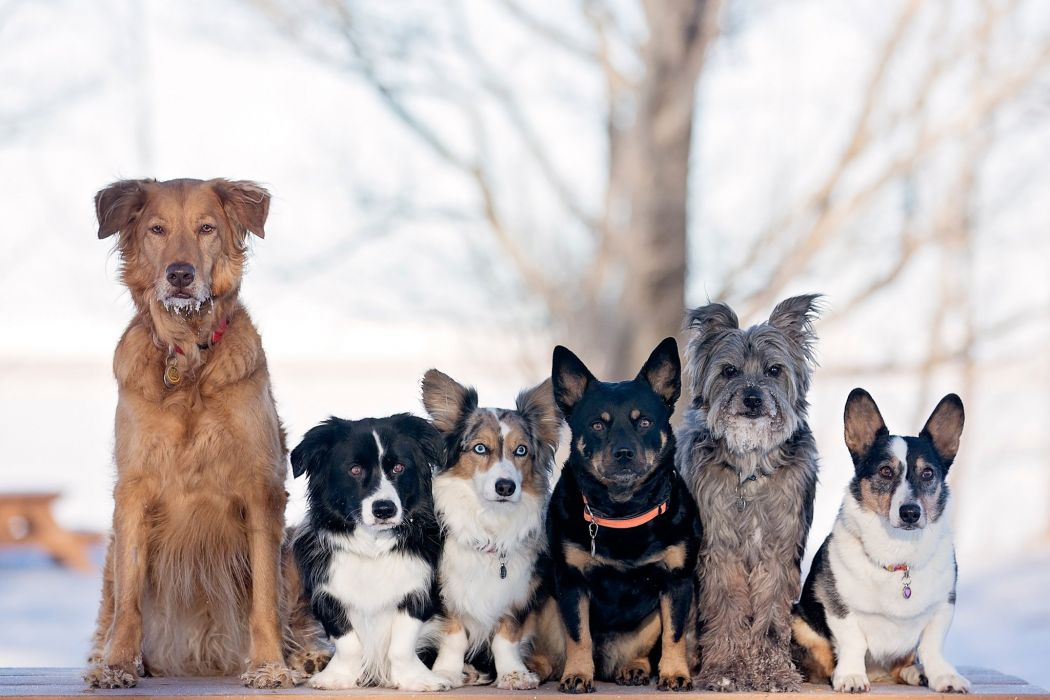 breeds dogs various wallpaper
